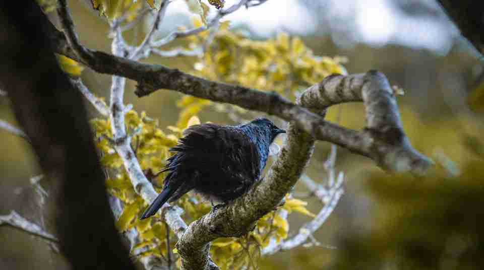 Zealandia twilight bird tree