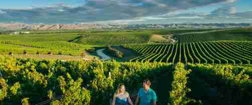 couple walking through vineyard v2