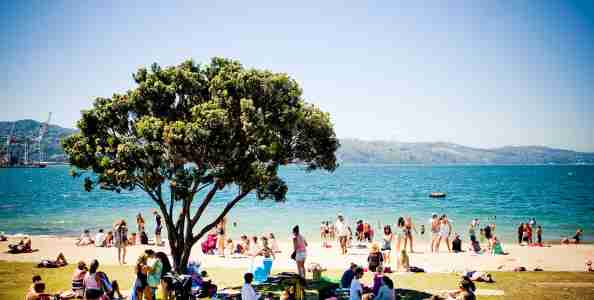 Summer day at the beach in Oriental Bay